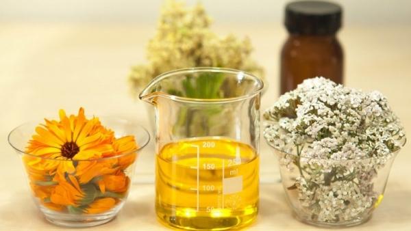 plantas-medicinales-800×450